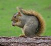 10399squirrel.JPG